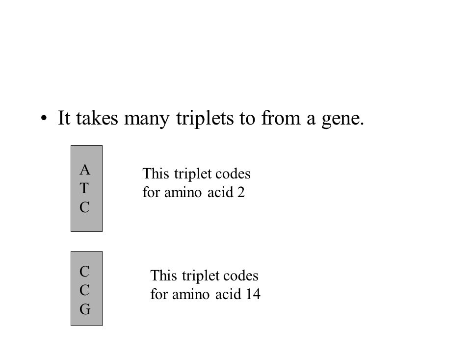 It takes many triplets to from a gene.