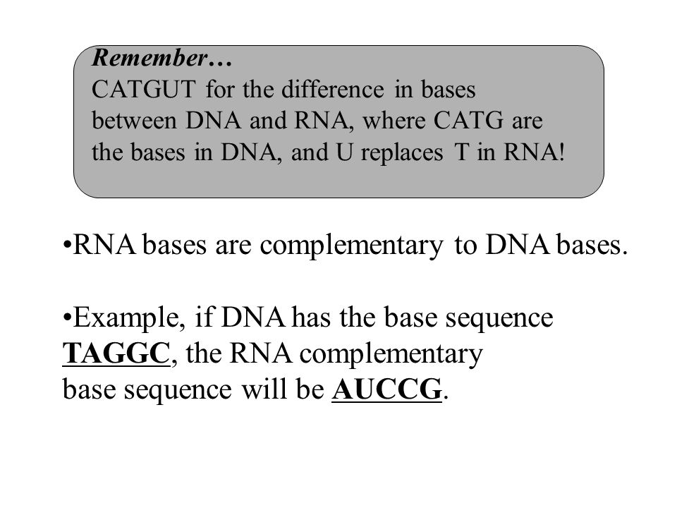 RNA bases are complementary to DNA bases.