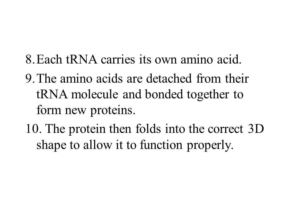 8. Each tRNA carries its own amino acid.