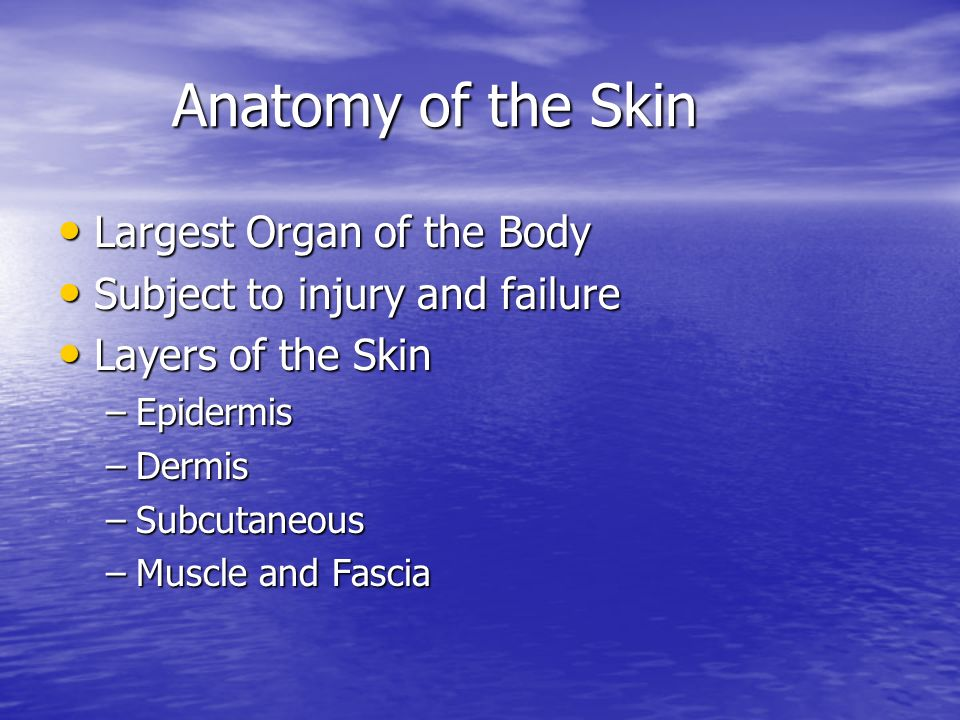 Anatomy of the Skin Largest Organ of the Body