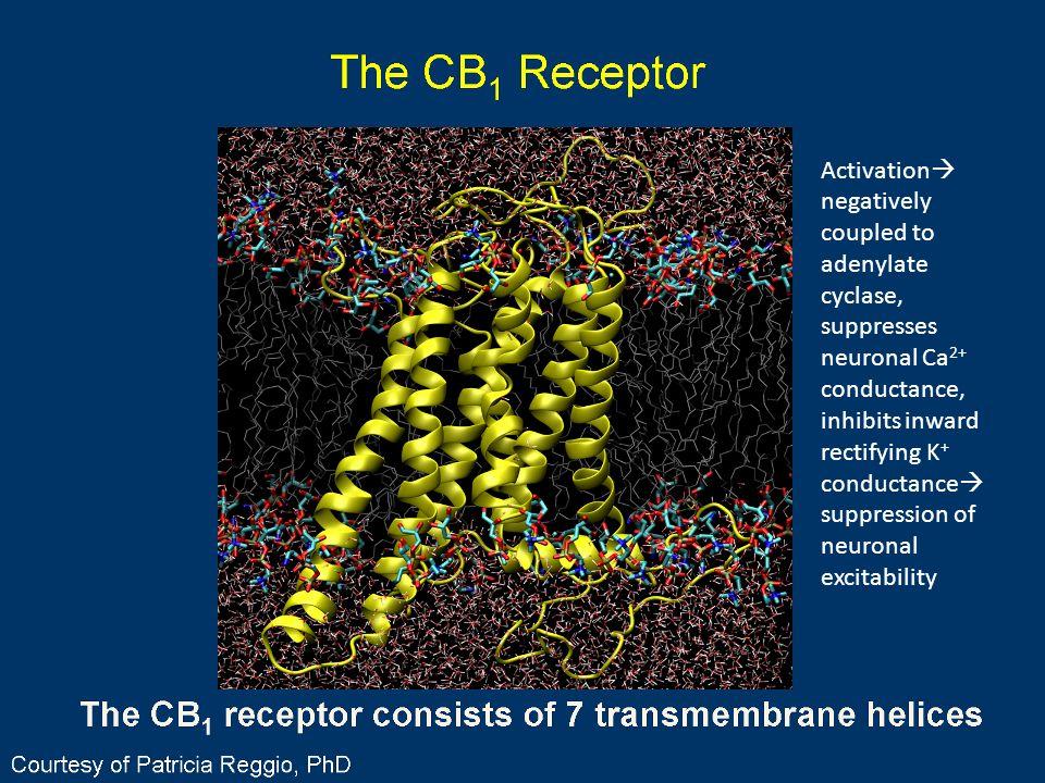 The CB1 Receptor