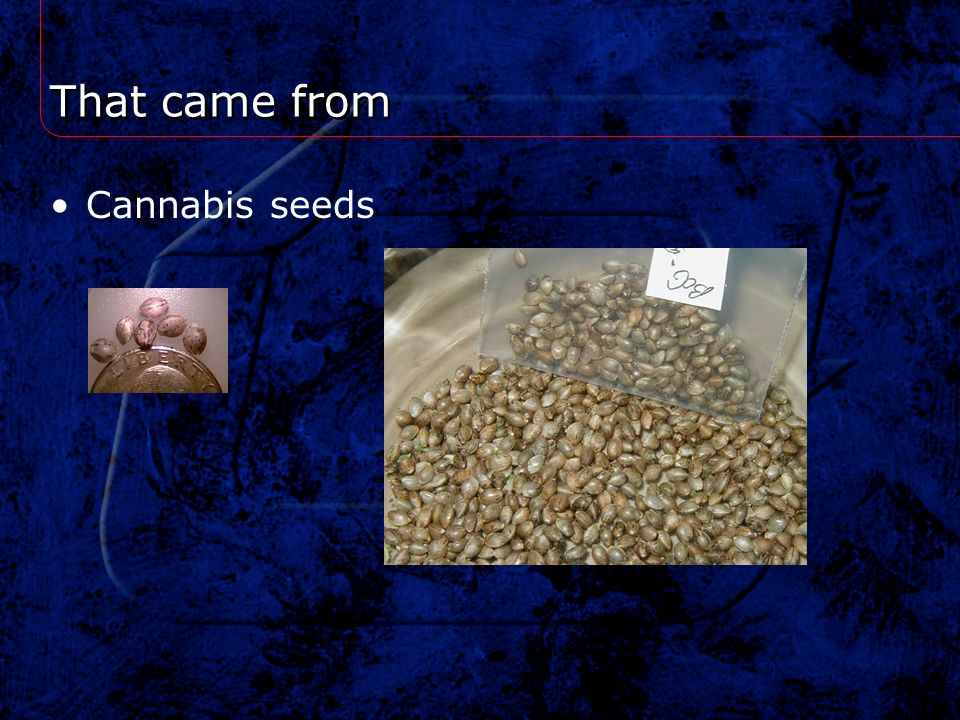 That came from Cannabis seeds