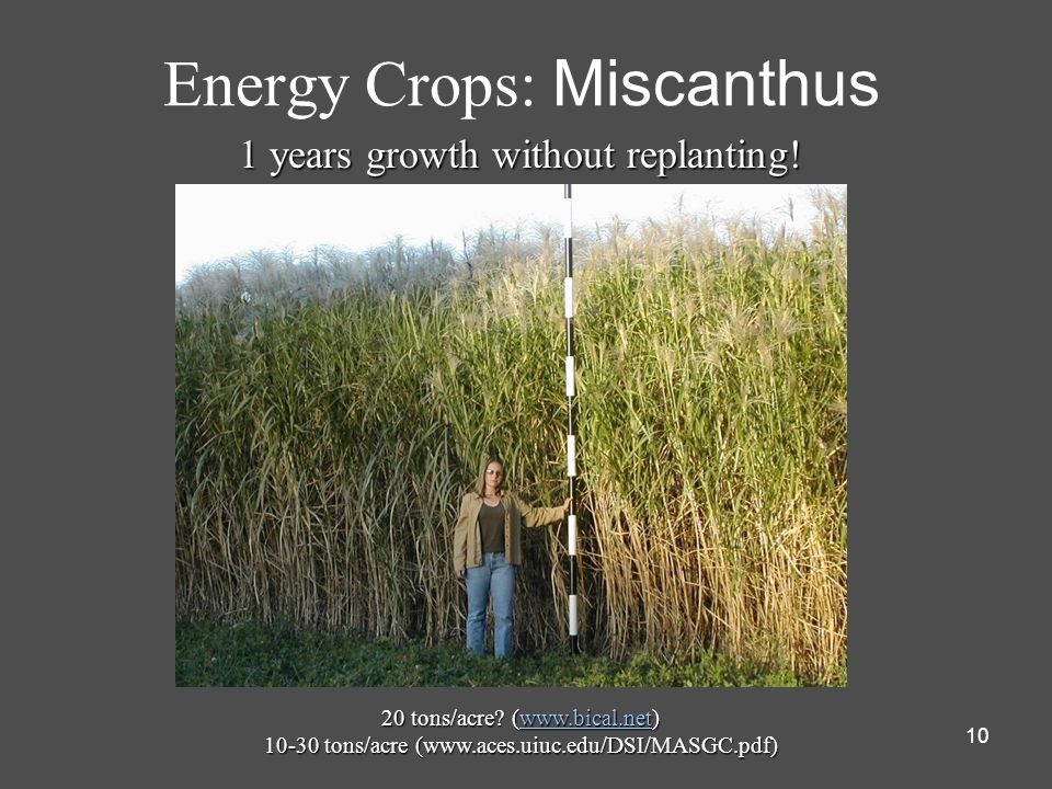 Energy Crops: Miscanthus