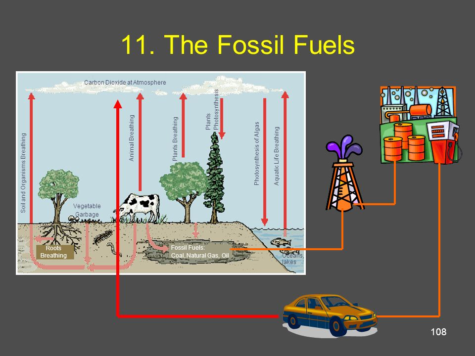11. The Fossil Fuels Carbon Dioxide at Atmosphere Photosynthesis