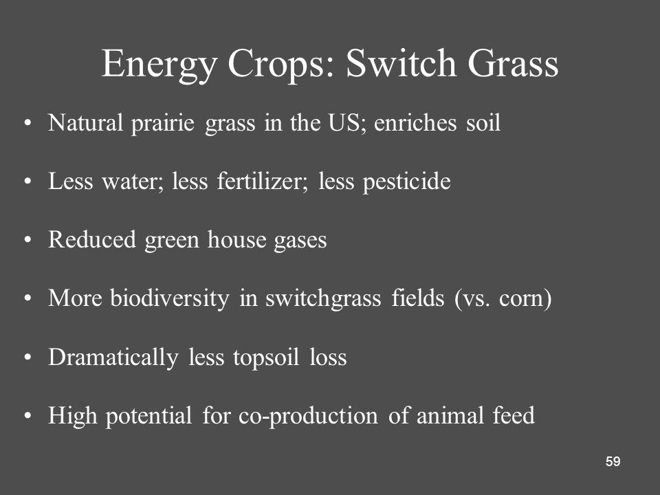 Energy Crops: Switch Grass