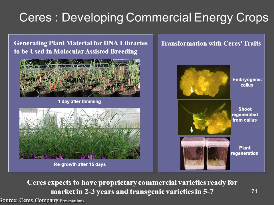 Ceres : Developing Commercial Energy Crops