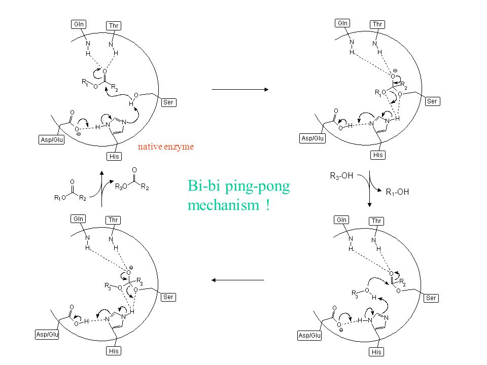native enzyme R3-OH Bi-bi ping-pong mechanism ! R1-OH