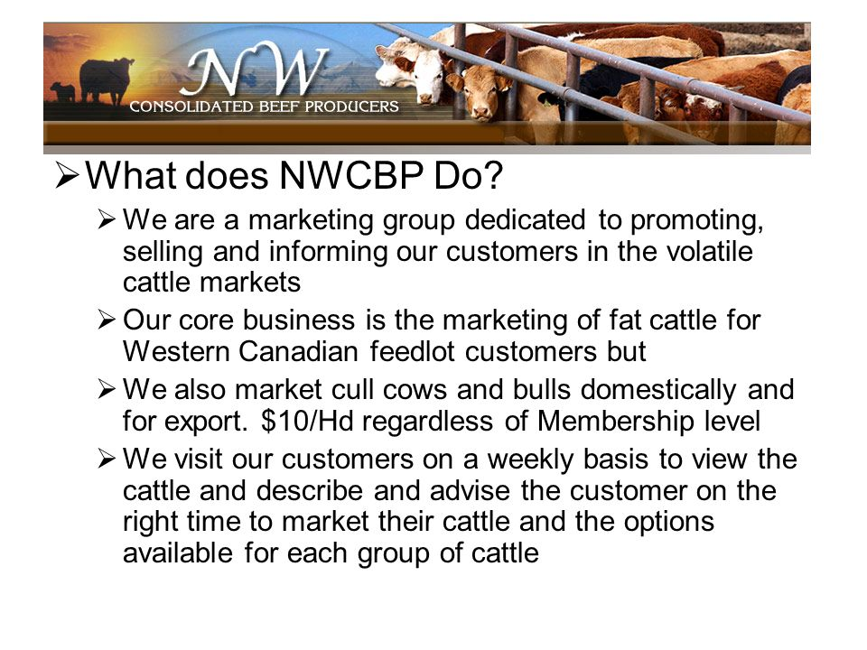 What does NWCBP Do We are a marketing group dedicated to promoting, selling and informing our customers in the volatile cattle markets.