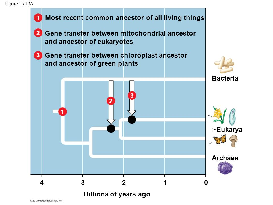 Most recent common ancestor of all living things