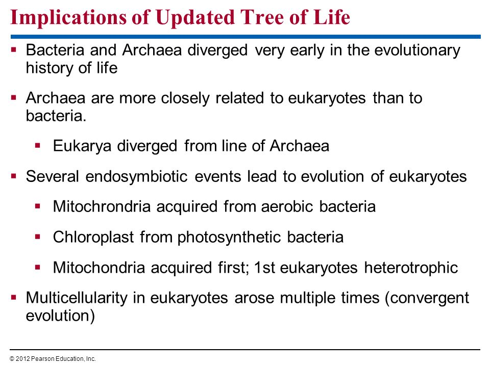Implications of Updated Tree of Life
