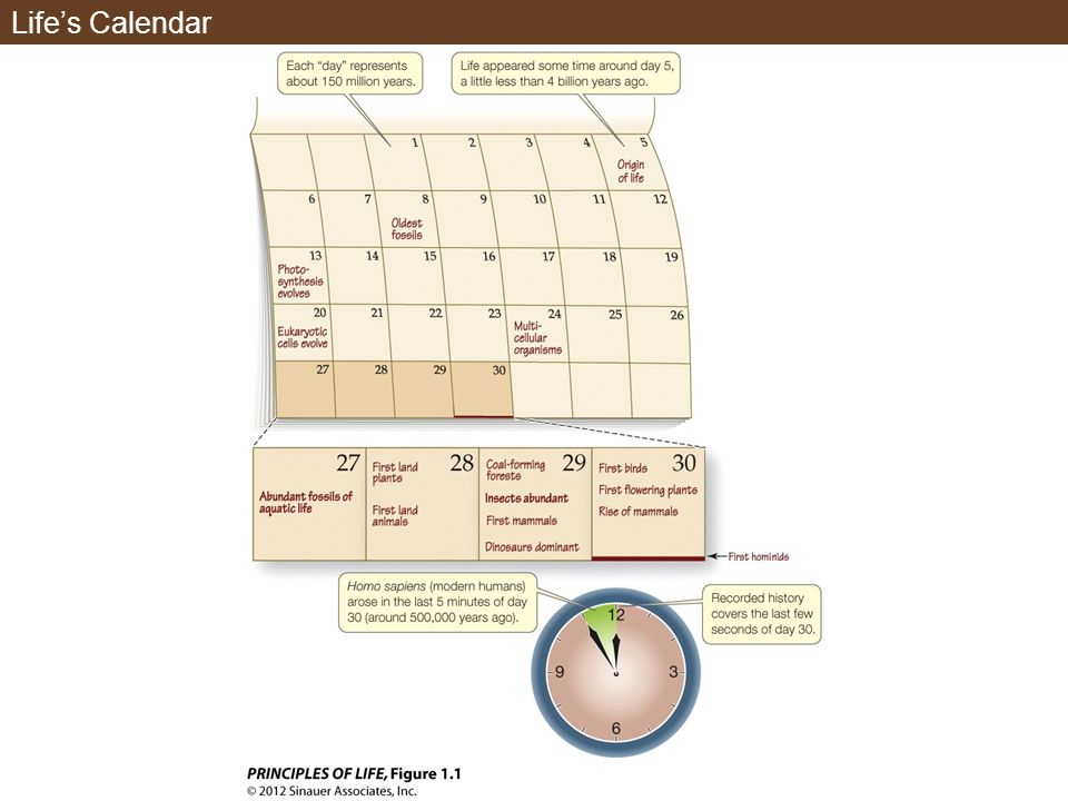 Life's Calendar