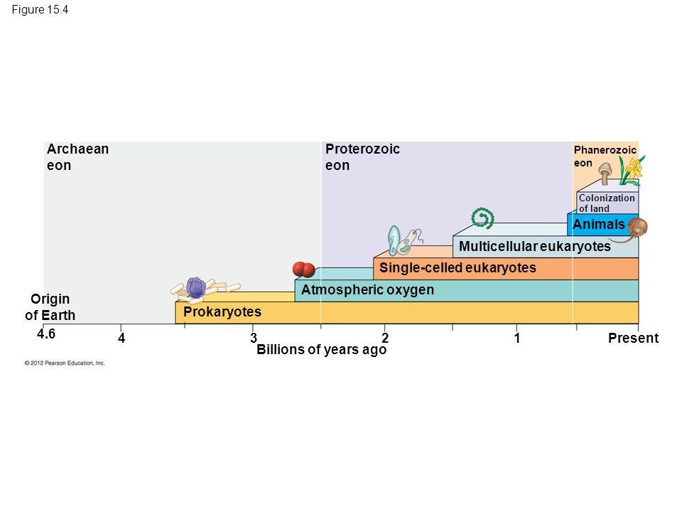 Multicellular eukaryotes