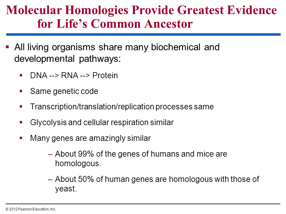 Molecular Homologies Provide Greatest Evidence for Life's Common Ancestor