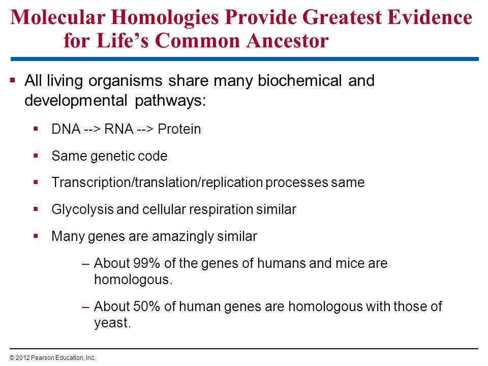 Molecular Homologies Provide Greatest Evidence for Life's Common Ancestor