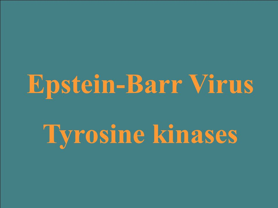 Epstein-Barr Virus Tyrosine kinases