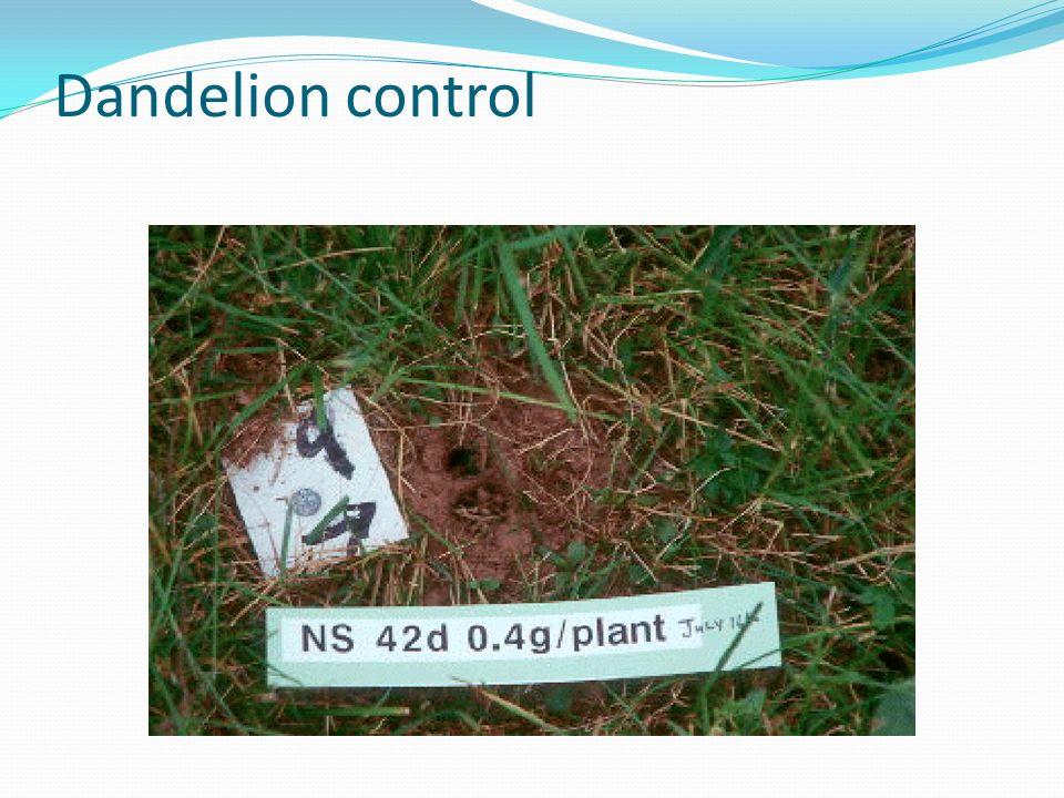 Dandelion control