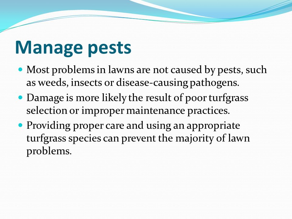 Manage pests Most problems in lawns are not caused by pests, such as weeds, insects or disease-causing pathogens.