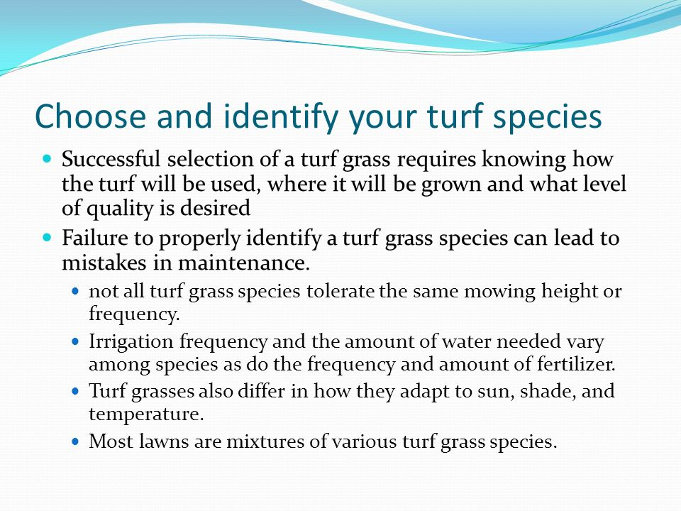 Choose and identify your turf species