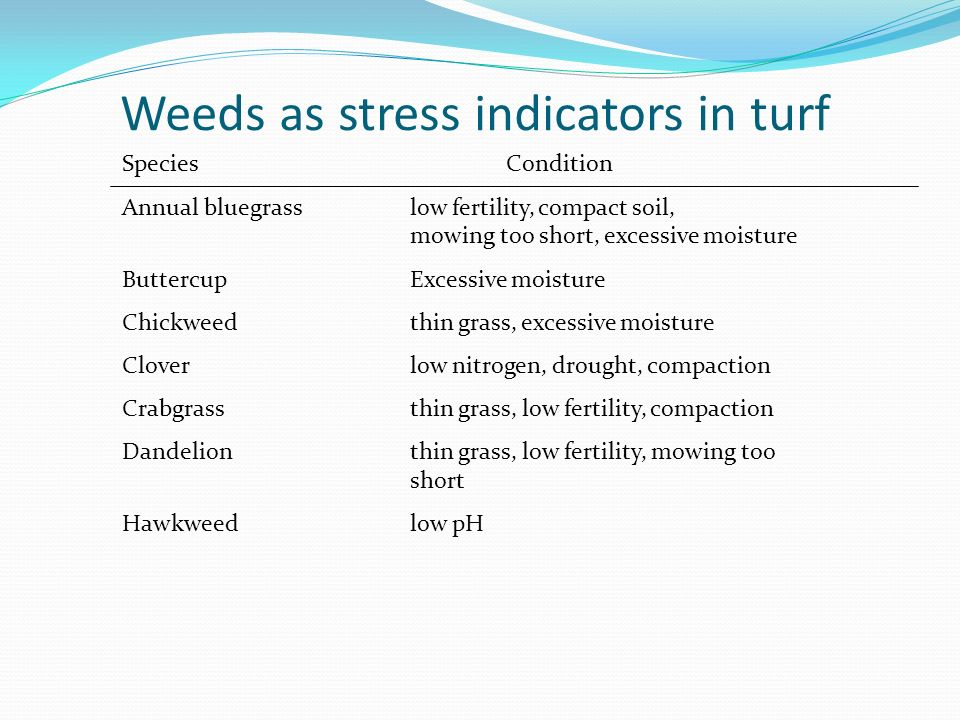 Weeds as stress indicators in turf