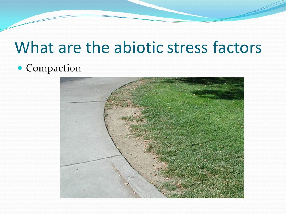 What are the abiotic stress factors