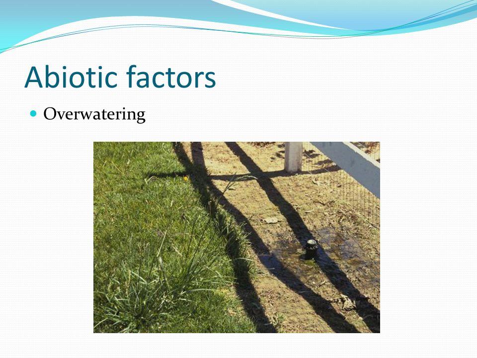 Abiotic factors Overwatering