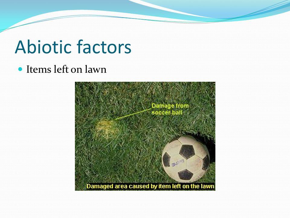 Abiotic factors Items left on lawn