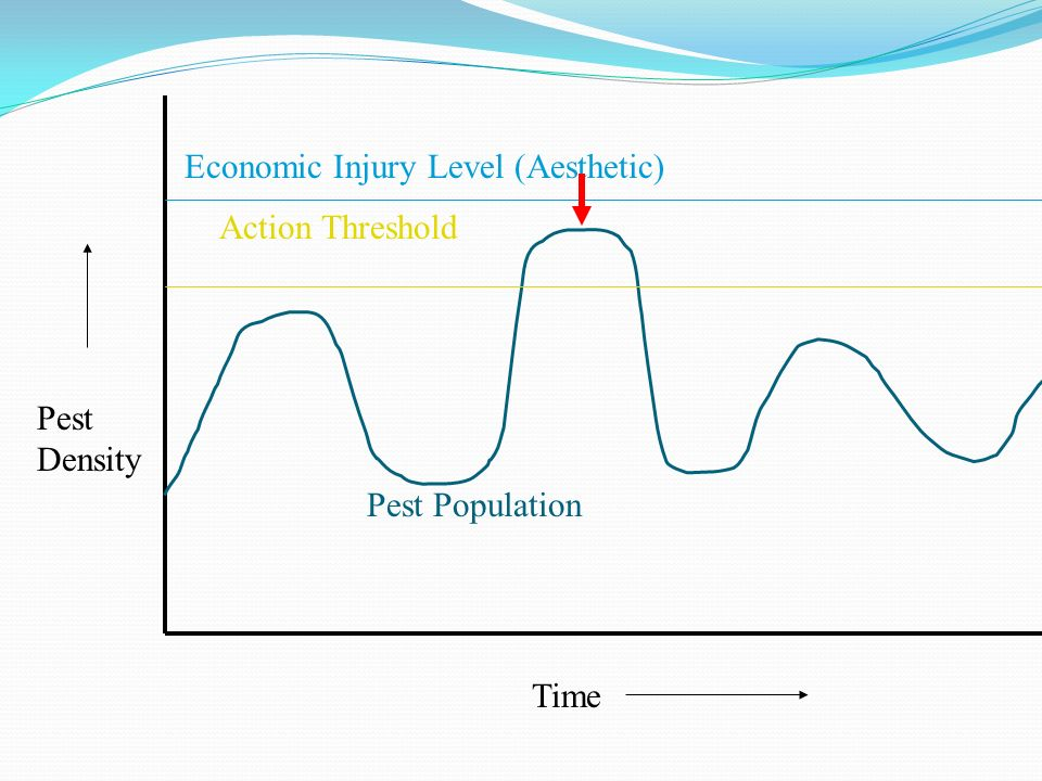 Economic Injury Level (Aesthetic)
