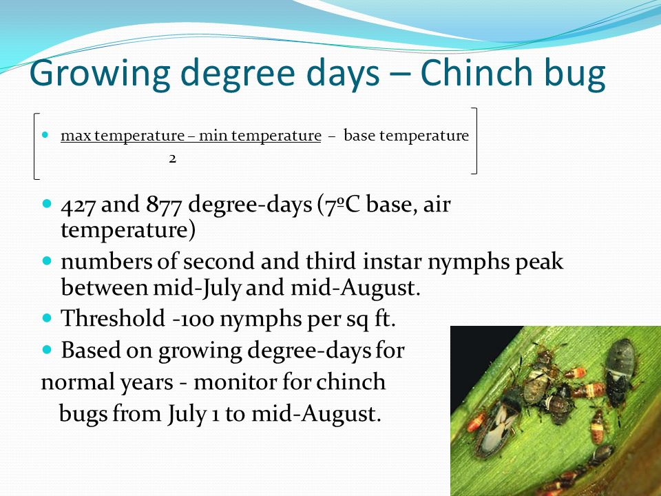 Growing degree days – Chinch bug