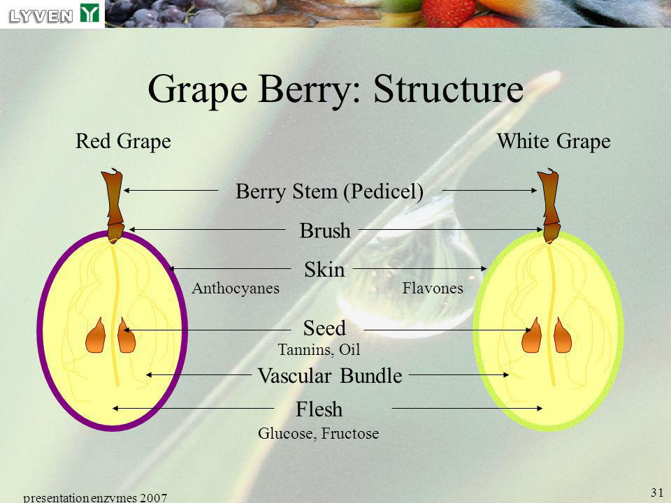 Grape Berry: Structure