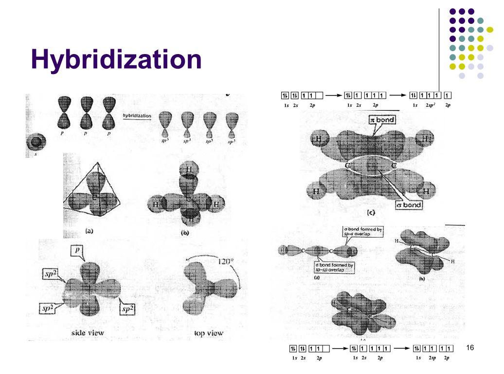 Hybridization 16