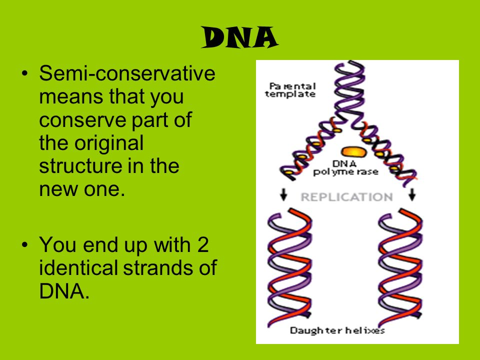 DNA Semi-conservative means that you conserve part of the original structure in the new one.