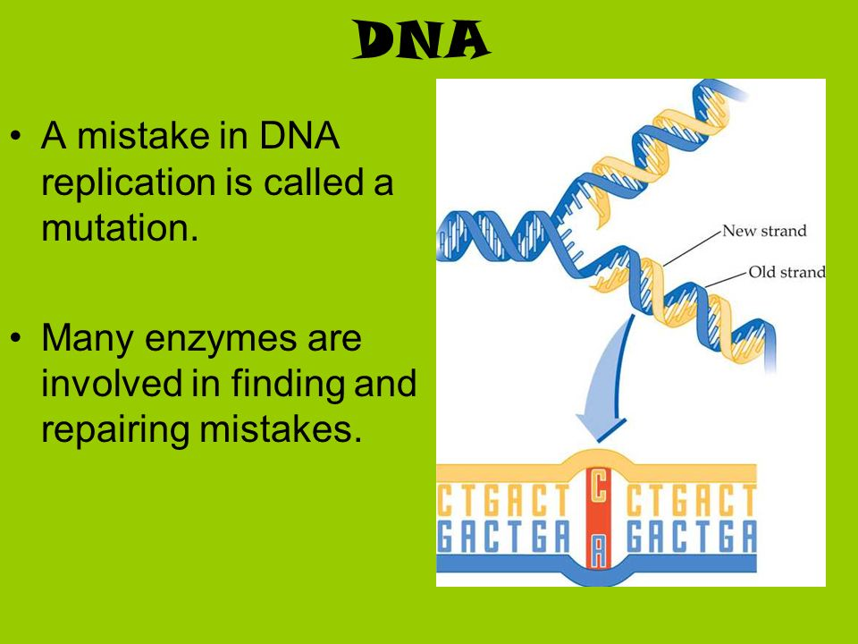 DNA A mistake in DNA replication is called a mutation.
