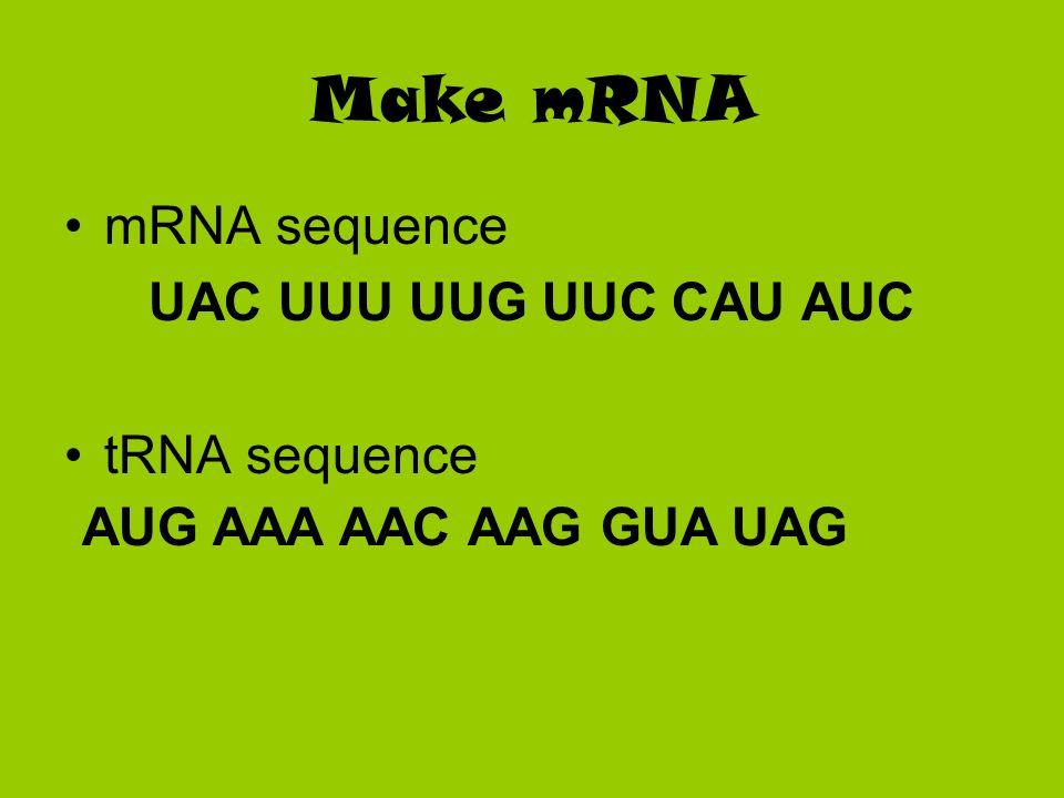 Make mRNA mRNA sequence UAC UUU UUG UUC CAU AUC tRNA sequence