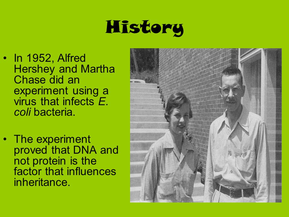 History In 1952, Alfred Hershey and Martha Chase did an experiment using a virus that infects E. coli bacteria.