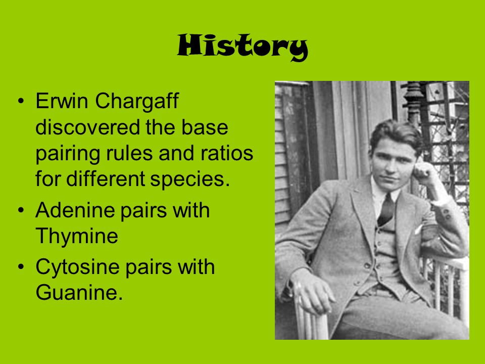 History Erwin Chargaff discovered the base pairing rules and ratios for different species. Adenine pairs with Thymine.