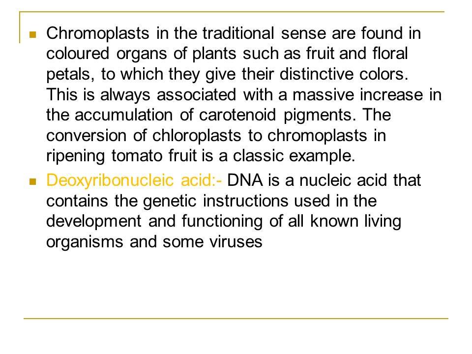 Chromoplasts in the traditional sense are found in coloured organs of plants such as fruit and floral petals, to which they give their distinctive colors. This is always associated with a massive increase in the accumulation of carotenoid pigments. The conversion of chloroplasts to chromoplasts in ripening tomato fruit is a classic example.
