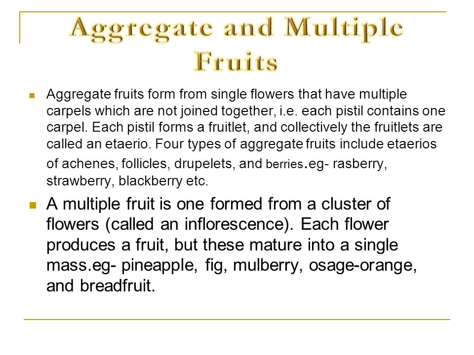 Aggregate and Multiple Fruits