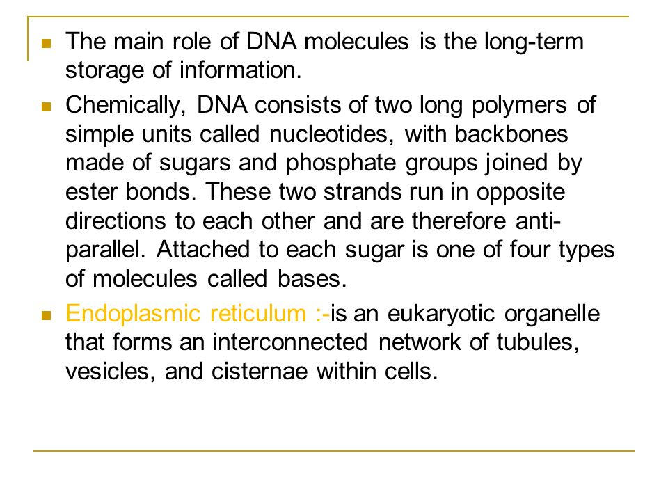 The main role of DNA molecules is the long-term storage of information.