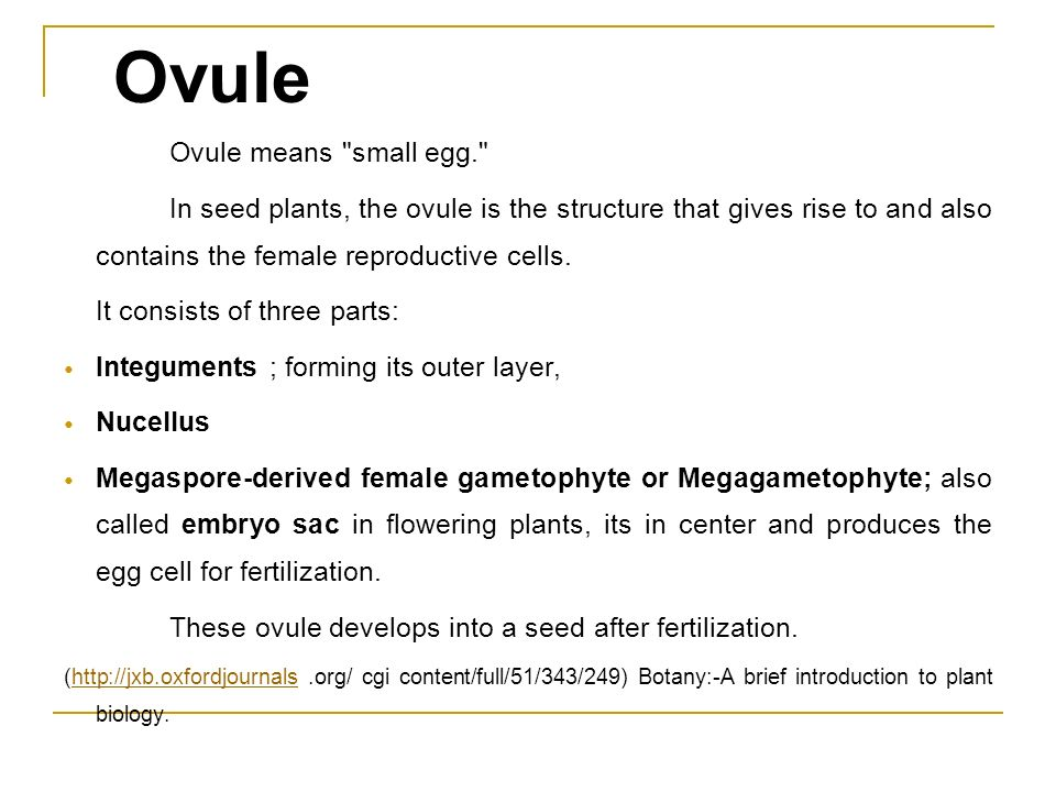Ovule Ovule means small egg.