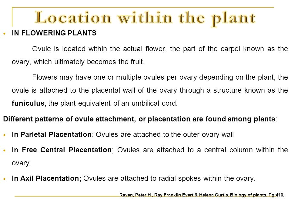 Location within the plant