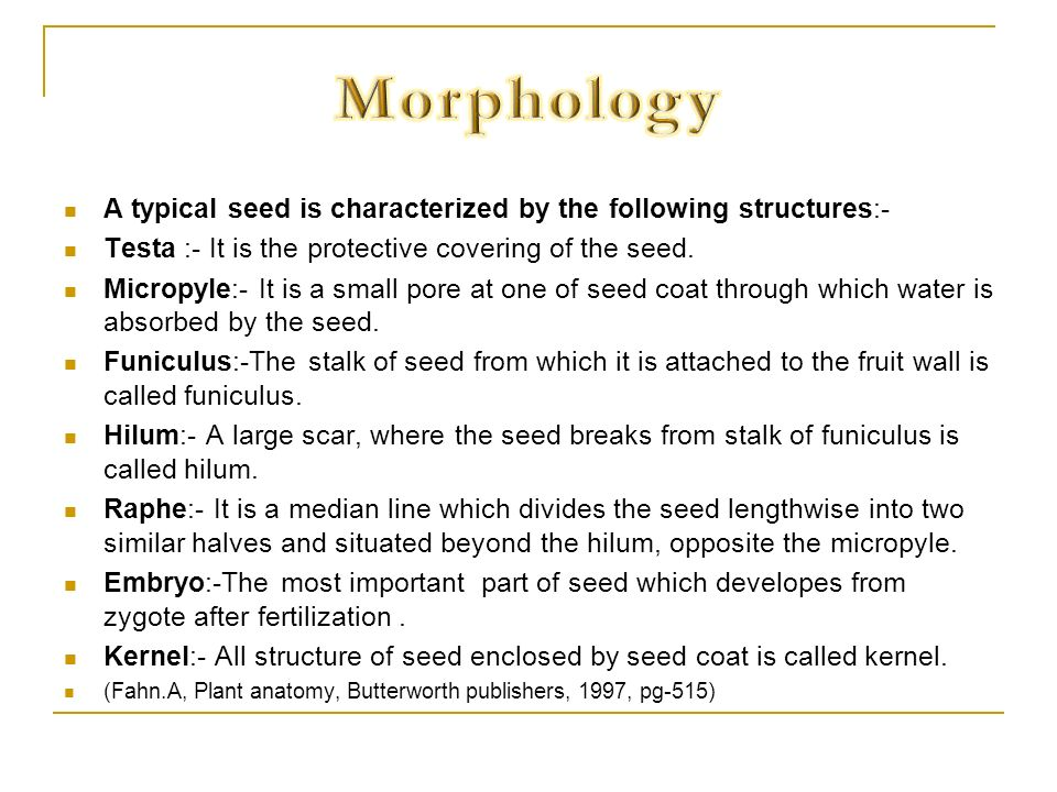 Morphology A typical seed is characterized by the following structures:- Testa :- It is the protective covering of the seed.