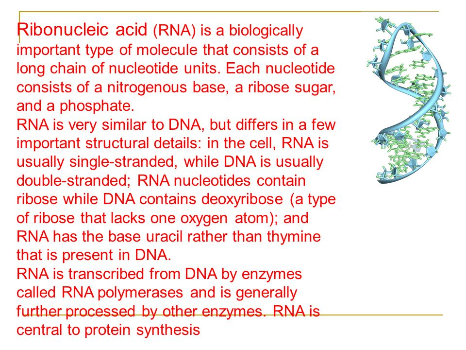 Ribonucleic acid (RNA) is a biologically important type of molecule that consists of a long chain of nucleotide units. Each nucleotide consists of a nitrogenous base, a ribose sugar, and a phosphate.