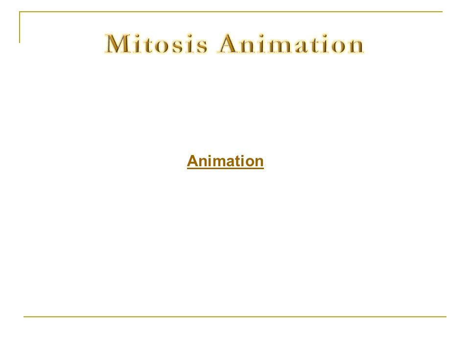 Mitosis Animation Animation