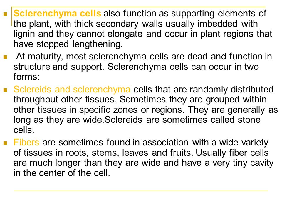 Sclerenchyma cells also function as supporting elements of the plant, with thick secondary walls usually imbedded with lignin and they cannot elongate and occur in plant regions that have stopped lengthening.