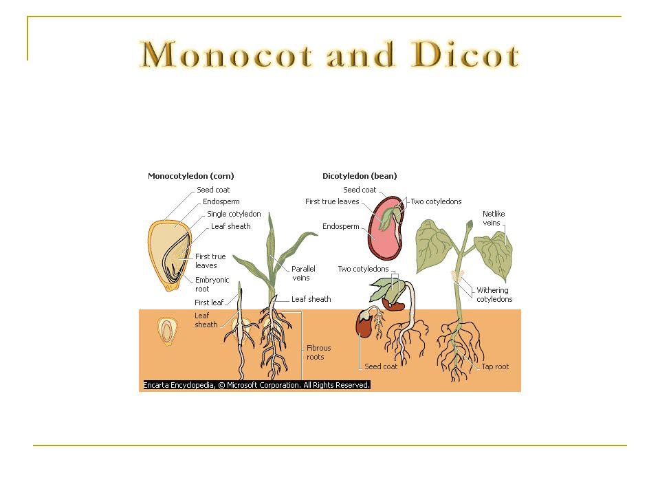 Monocot and Dicot