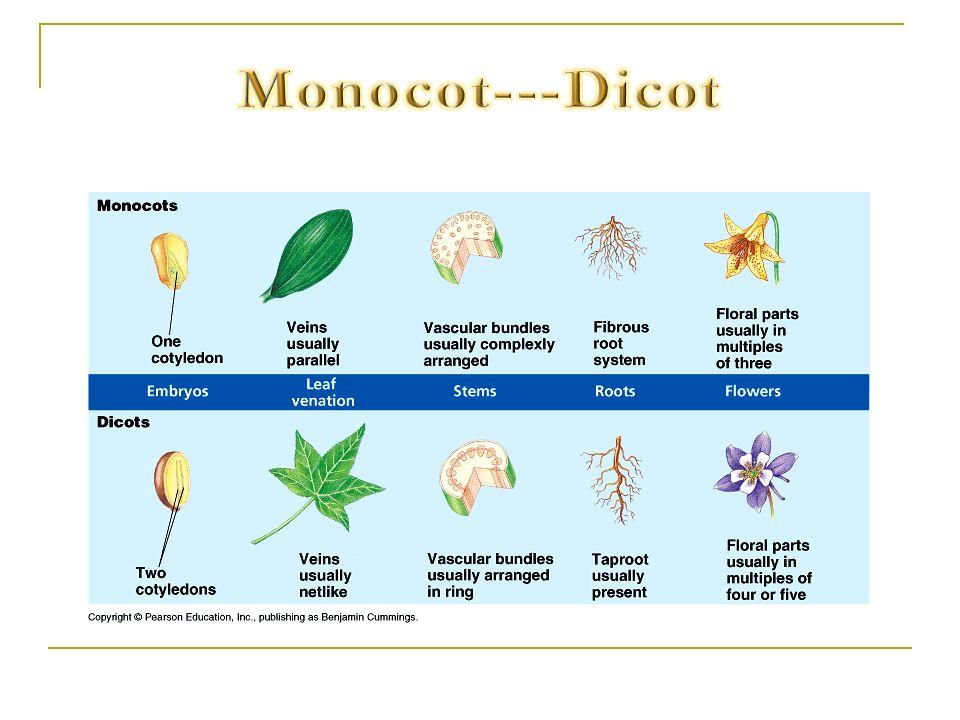 Monocot---Dicot