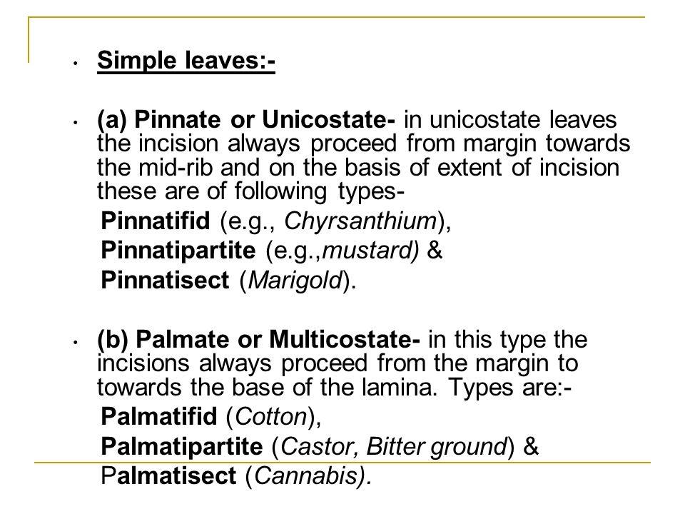 Simple leaves:-