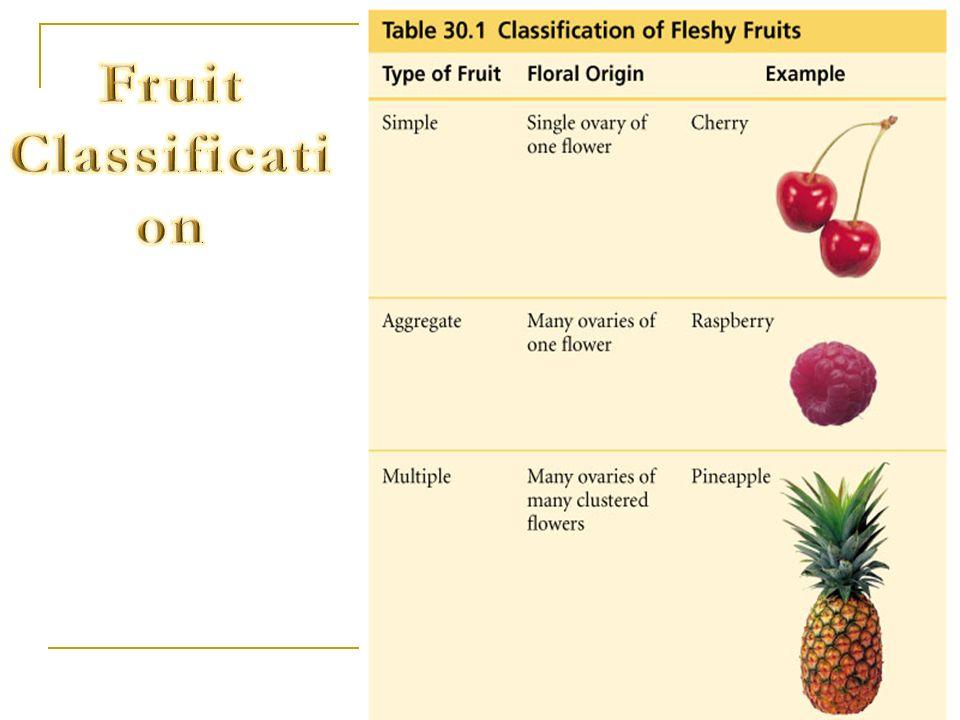 Fruit Classification