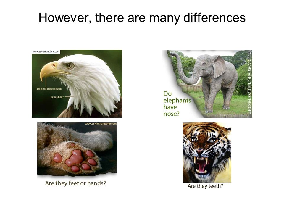 However, there are many differences