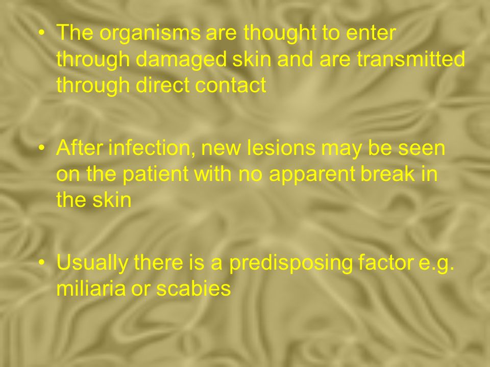 The organisms are thought to enter through damaged skin and are transmitted through direct contact